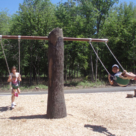 Tree Swings